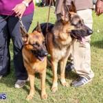 Bermuda Kennel Club BKC Dog Show, October 19, 2013-59