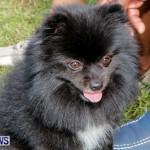 Bermuda Kennel Club BKC Dog Show, October 19, 2013-60