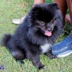 Bermuda Kennel Club BKC Dog Show, October 19, 2013-61