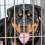 Bermuda Kennel Club BKC Dog Show, October 19, 2013-66