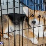 Bermuda Kennel Club BKC Dog Show, October 19, 2013-67