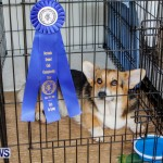 Bermuda Kennel Club BKC Dog Show, October 19, 2013-68