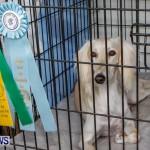 Bermuda Kennel Club BKC Dog Show, October 19, 2013-70