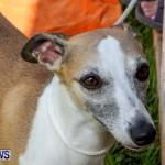 Bermuda Kennel Club BKC Dog Show, October 19, 2013-71
