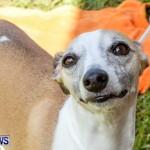 Bermuda Kennel Club BKC Dog Show, October 19, 2013-72