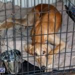 Bermuda Kennel Club BKC Dog Show, October 19, 2013-74