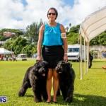 Bermuda Kennel Club BKC Dog Show, October 19, 2013-78