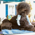 Bermuda Kennel Club BKC Dog Show, October 19, 2013-81