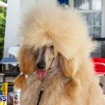 Bermuda Kennel Club BKC Dog Show, October 19, 2013-82