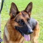 Bermuda Kennel Club BKC Dog Show, October 19, 2013-85