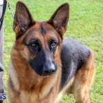 Bermuda Kennel Club BKC Dog Show, October 19, 2013-86