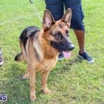 Bermuda Kennel Club BKC Dog Show, October 19, 2013-87