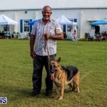 Bermuda Kennel Club BKC Dog Show, October 19, 2013-88