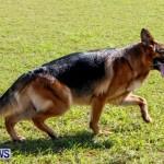 Bermuda Kennel Club BKC Dog Show, October 19, 2013-98