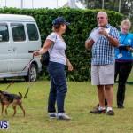 SPCA Fun Fair Bermuda, October 12, 2013-1