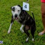 SPCA Fun Fair Bermuda, October 12, 2013-24