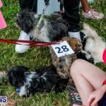 SPCA Fun Fair Bermuda, October 12, 2013-43