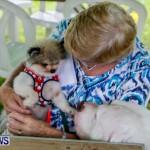 SPCA Fun Fair Bermuda, October 12, 2013-64