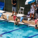 Sharks Sprint Swim Meet Bermuda, October 19, 2013-19