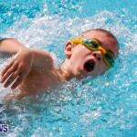 Sharks Sprint Swim Meet Bermuda, October 19, 2013-58