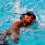 Sharks Sprint Swim Meet Bermuda, October 19, 2013-59