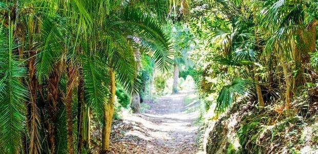 Bermuda arboretum generic