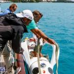 Aleksander Olek Doba Spirit of Bermuda Olo, March 23 2014-12