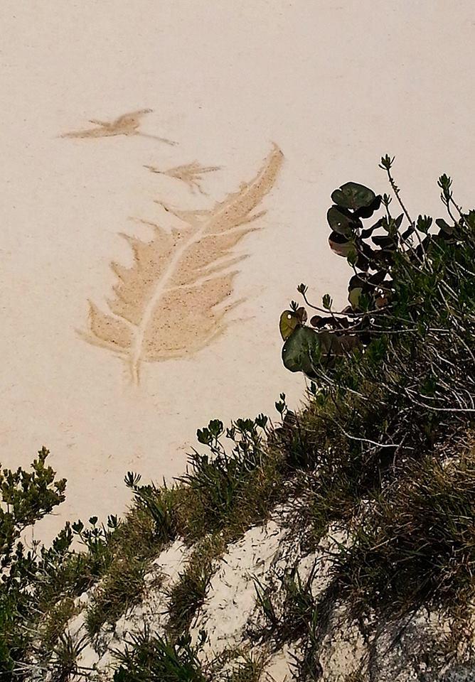 Bermuda Beach Art 2014 Tara Cassidy - Best Overall