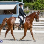 FEI Dressage Show Bermuda, March 5 2014-1