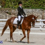 FEI Dressage Show Bermuda, March 5 2014-15
