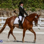 FEI Dressage Show Bermuda, March 5 2014-16
