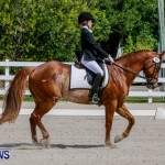 FEI Dressage Show Bermuda, March 5 2014-2