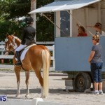 FEI Dressage Show Bermuda, March 5 2014-21