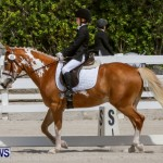 FEI Dressage Show Bermuda, March 5 2014-24