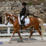 FEI Dressage Show Bermuda, March 5 2014-27