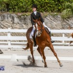 FEI Dressage Show Bermuda, March 5 2014-9