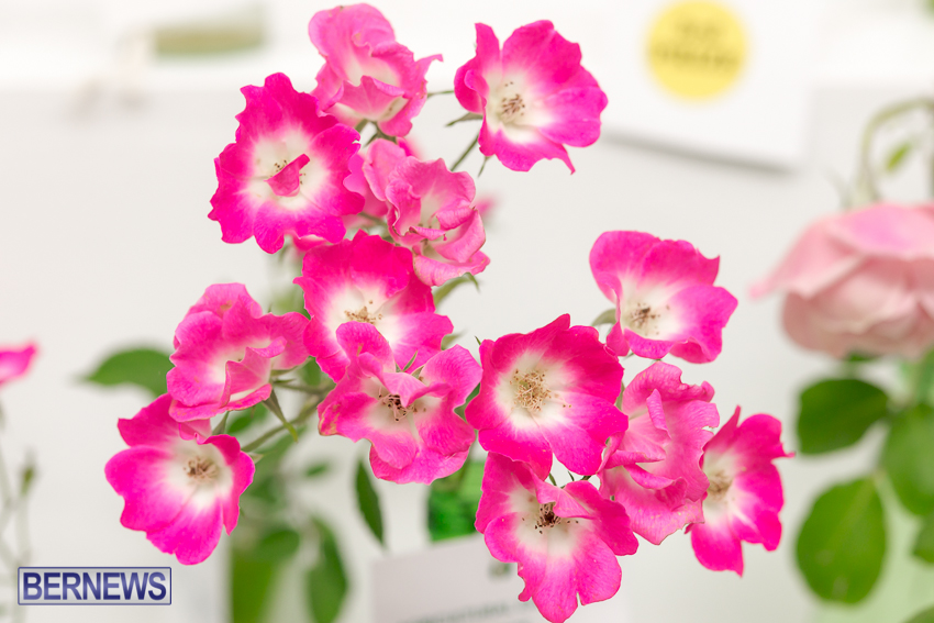2014-Ag-Show-flowers-Bermuda-20