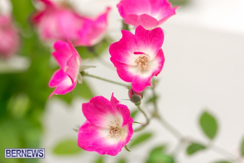 2014-Ag-Show-flowers-Bermuda-21
