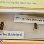 Bermuda Bee Fair, April 12 2014-19