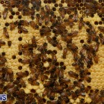 Bermuda Bee Fair, April 12 2014-39