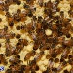 Bermuda Bee Fair, April 12 2014-41
