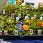 Bermuda Bee Fair, April 12 2014-7