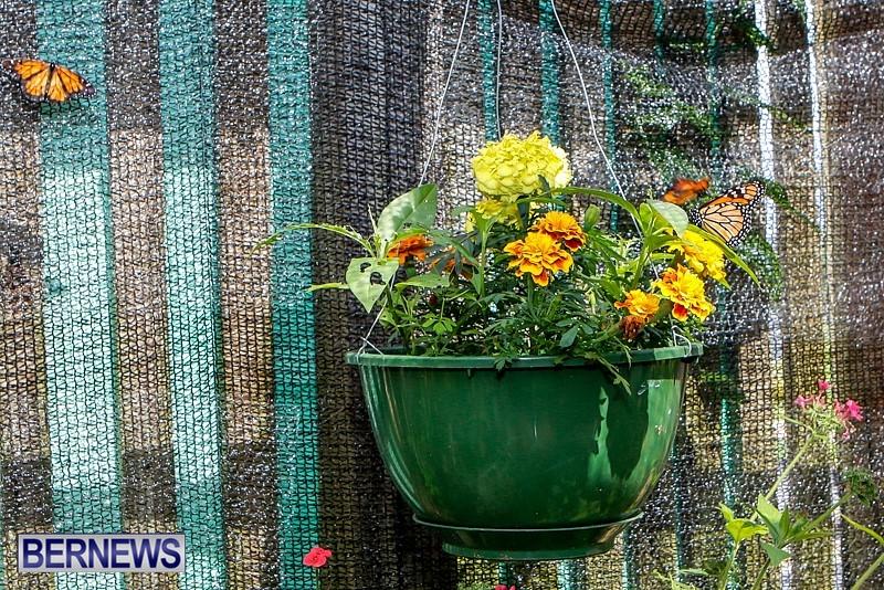Butterfly-House-Brighton-Hill-Nursery-Bermuda-April-5-2014-27