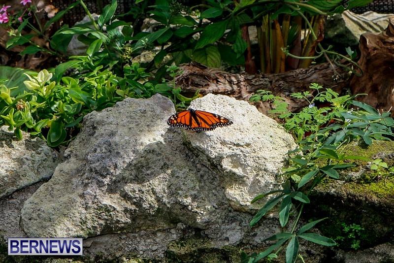 Butterfly-House-Brighton-Hill-Nursery-Bermuda-April-5-2014-29