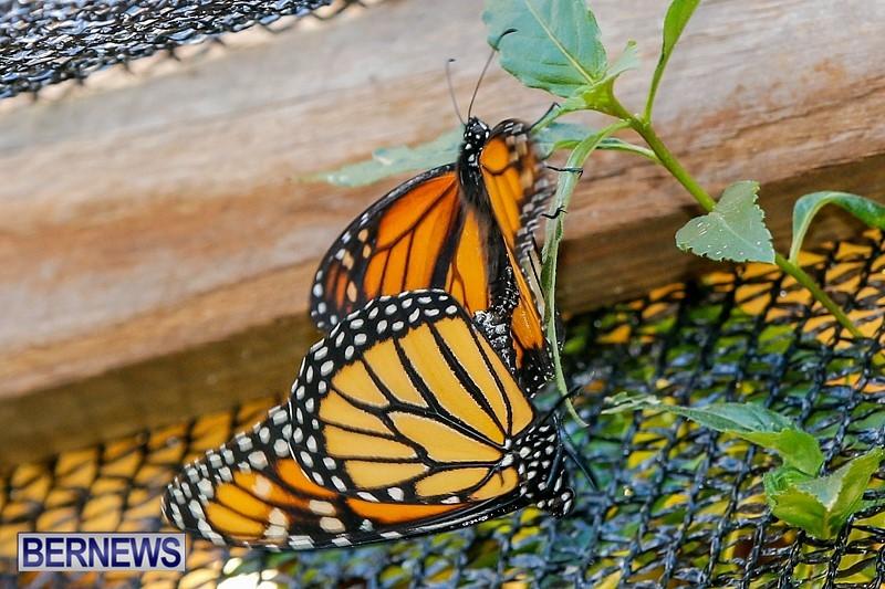 Butterfly-House-Brighton-Hill-Nursery-Bermuda-April-5-2014-44