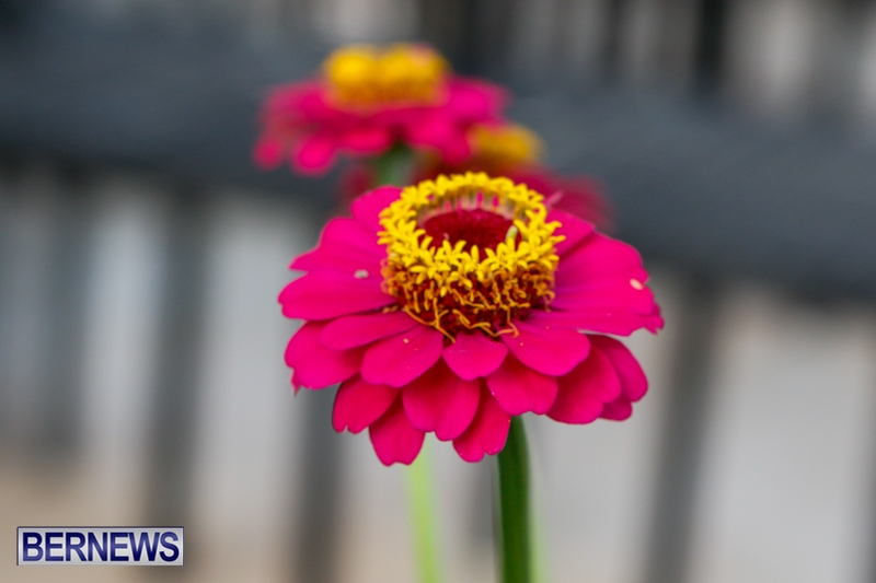 Plants-Flowers-at-the-Agricultural-Exhibition-Bermuda-April-24-2014-57