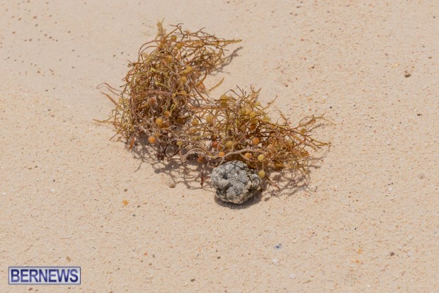 greaseballs on Bermuda beach Apr 2014 (2)