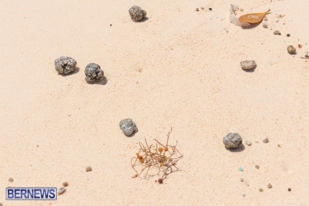 greaseballs on Bermuda beach Apr 2014 (3)