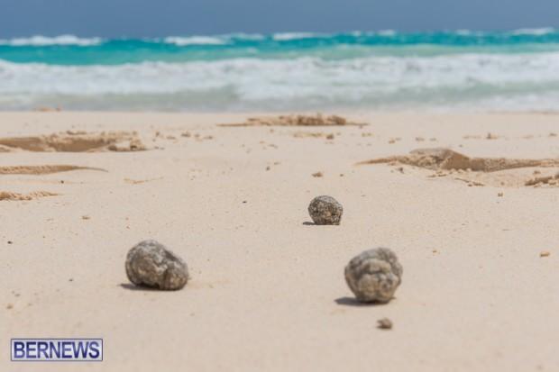 greaseballs on Bermuda beach Apr 2014 (5)