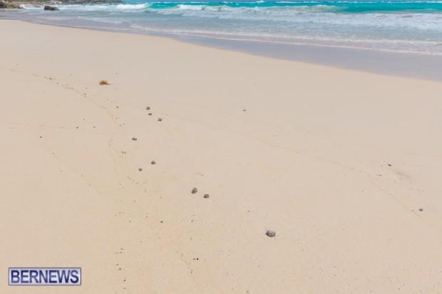 greaseballs on Bermuda beach Apr 2014 (7)